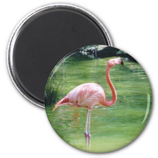 Greater Flamingo Magnet