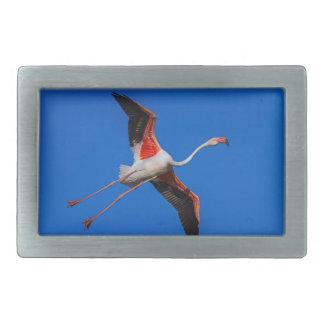 Greater flamingo, phoenicopterus roseus belt buckles