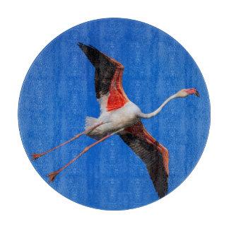 Greater flamingo, phoenicopterus roseus boards