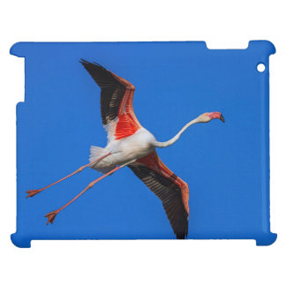 Greater flamingo, phoenicopterus roseus case for the iPad 2 3 4