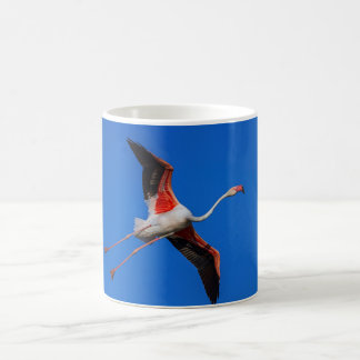 Greater flamingo, phoenicopterus roseus coffee mug