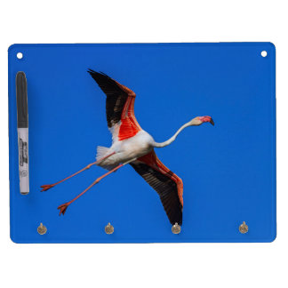Greater flamingo, phoenicopterus roseus dry erase board with keychain holder