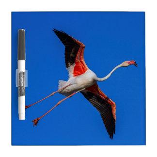 Greater flamingo, phoenicopterus roseus Dry-Erase whiteboards