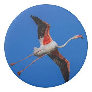 Greater flamingo, phoenicopterus roseus eraser