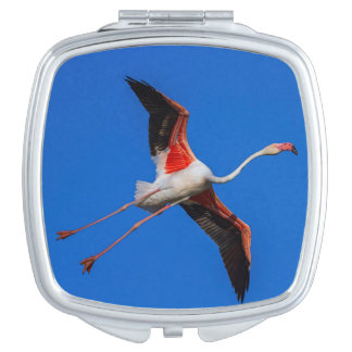 Greater flamingo, phoenicopterus roseus makeup mirrors