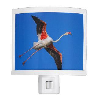 Greater flamingo, phoenicopterus roseus night lites