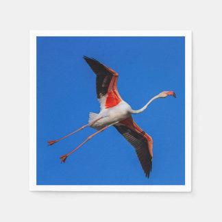 Greater flamingo, phoenicopterus roseus paper napkin