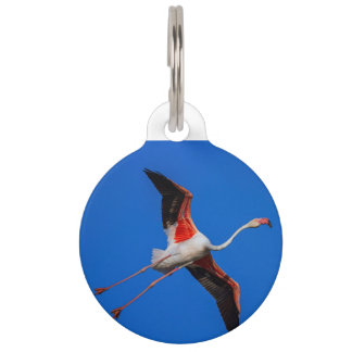Greater flamingo, phoenicopterus roseus pet name tag