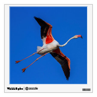Greater flamingo, phoenicopterus roseus wall decal