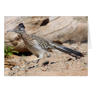 Greater Roadrunner Card