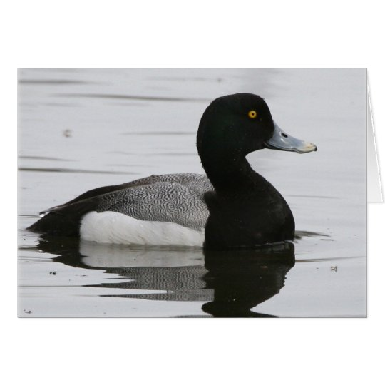 Greater Scaup Card