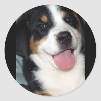 Greater Swiss Mountain Dog Puppy Classic Round Sticker
