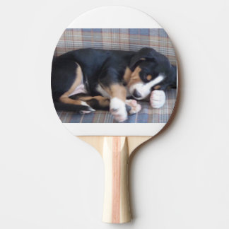 greater swiss mountain dog puppy ping pong paddle