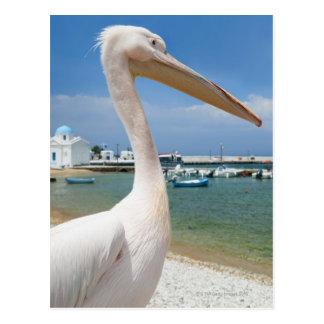 Greece, Cyclades Islands, Mykonos, Pelican on Postcard