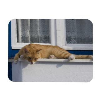 Greece, Mykonos. Curious orange tabby cat looks Rectangular Photo Magnet