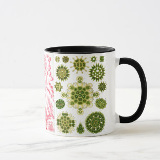 green algae, various, haeckel mug