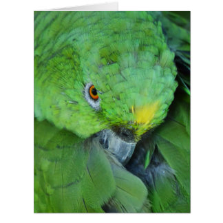 Green Amazon Parrot Large Greeting Card