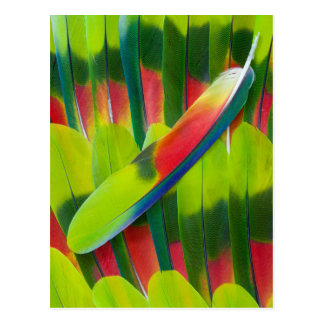Green amazon parrot feathers postcard