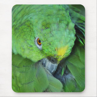 Green Amazon Parrot Mouse Pad