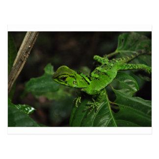Green Amazonas lizard Postcard