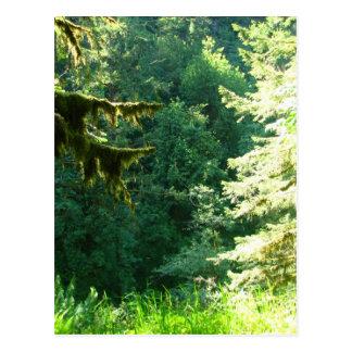 Green and Lush Postcard