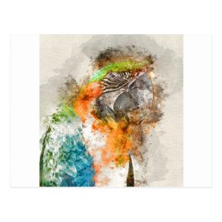 Green and Orange Macaw Bird Postcard