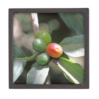 Green and Red Coffee Beans Premium Trinket Box