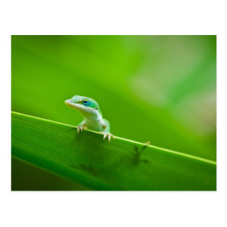 Green Anole Lizard Encounter Art Photography Postcard