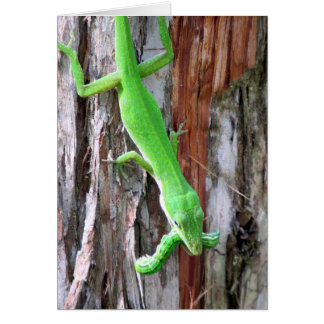 Green Anole (Lizard) Greeting Card