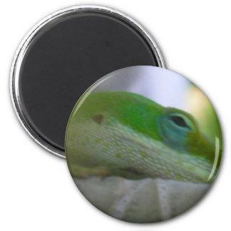 Green Anole Lizard Magnet