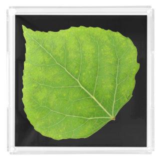 Green Aspen Leaf #11 Acrylic Tray