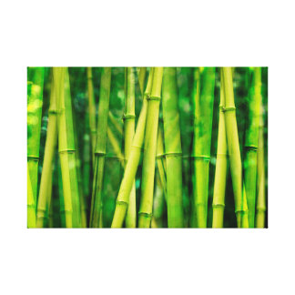 Green Bamboo Stretched Canvas Print