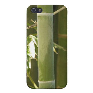 Green Bamboo iPhone 5 Covers