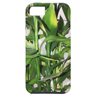 Green bamboo shoots and leaves iPhone 5 cover