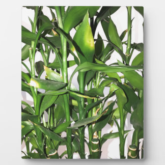 Green bamboo shoots and leaves plaque