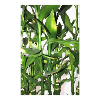 Green bamboo shoots and leaves stationery