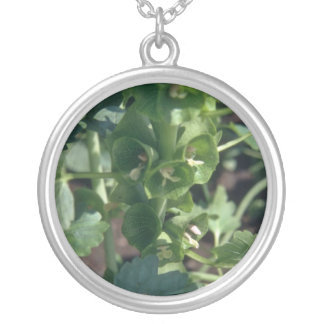 Green Bells Of Ireland (Moluccella Laevis) flowers Silver Plated Necklace