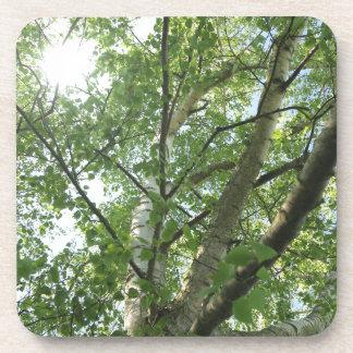 green birch on tree against blue sky coaster