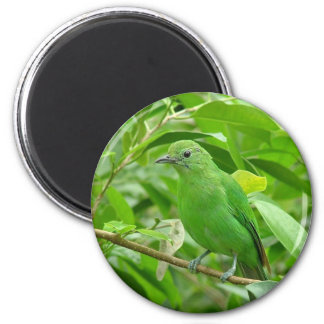 Green bird magnet