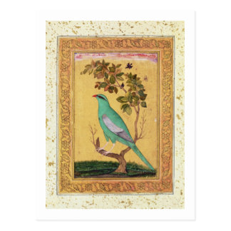 Green Bird, Mughal (gouache on paper) Postcard