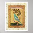 Green Bird, Mughal (gouache on paper) Poster