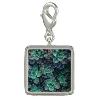 Green Blue Succulent Plants Photo Charms
