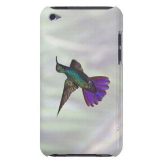 Green-breasted Mango Hummingbird Anthracocorax iPod Touch Cases