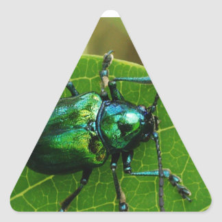 Green bug on green leaf triangle stickers