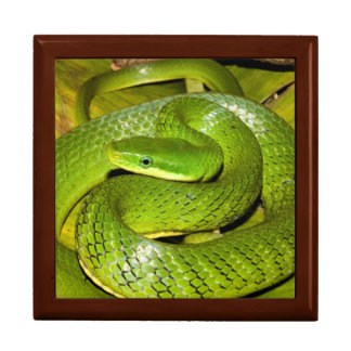 Green Bush Rat Snake Trinket Box