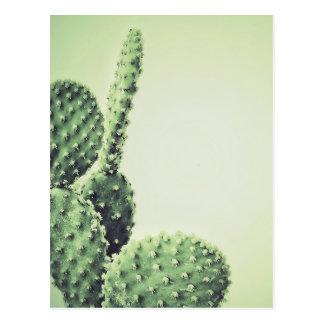 Green cactus postcard