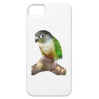 Green Cheek Conure iPhone 5 Covers