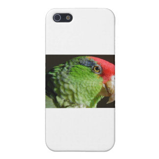 Green Cheeked Parrot Cases For iPhone 5