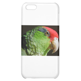 Green Cheeked Parrot iPhone 5C Cover