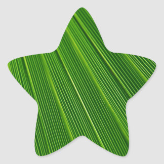 Green Christmas Holiday Colorful Palm Tree Fronds Star Sticker